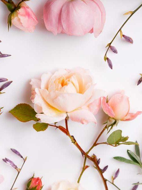roses women day